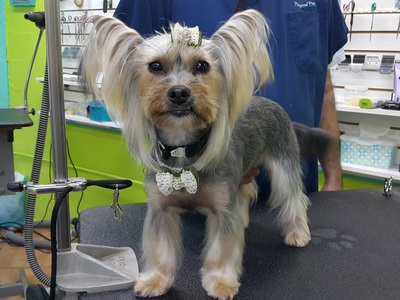 Asian Fusion Styling - Pampered Pets